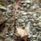 世にも奇妙な冬虫夏草 カメムシタケとハチタケともう一種類
